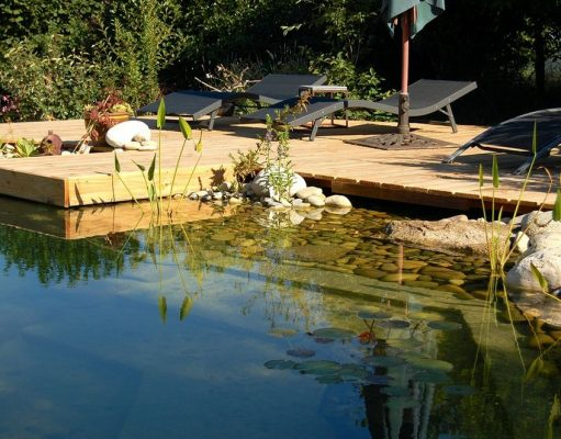 piscine naturelle biologique